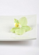 Orchid blossom in square dish