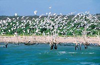 Dominican Republic, area of South-west, the Enriquillo lake