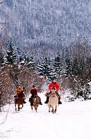 France, Jura (39), region of the Quatre Lacs, equestrian tourism in winter