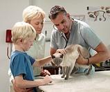 Veterinarian Examining Siamese Cat