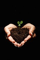Seedling in Man´s Hands