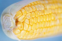 Close-up of a corn on the cob