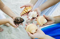 Low section view of three girls holding seashells on the beach