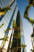 Low angle view of skyscrapers, Miami, Florida, USA