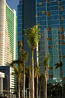 Low angle view of palm trees in front of buildings, Miami, Florida, USA
