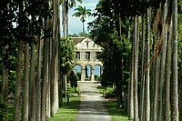 A boy´s private school is seen on a palm lined avenue on the island of Barbados, Caribbean