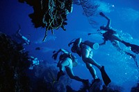Underwater view of scuba divers