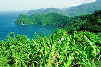 Maracas Bay is seen beyond a banana plantation, Trinidad, Caribbean