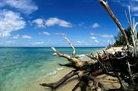 Tree trunks at a seashore, Buck Island, St. Croix, U.S. Virgin Islands