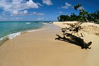 Scenic beach, Buck Island, St. Croix, U.S. Virgin Islands