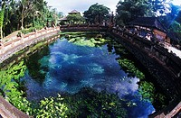 High angle view of a pond, Bali, Indonesia