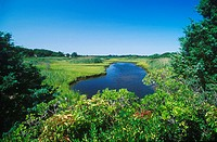 Pond in a garden, Cape Cod, Massachusetts, USA