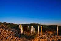 Bamboo sticks on the beach, Cape Cod, Massachusetts, USA