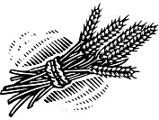 An illustration of a bundle of wheat illustrated in black and white