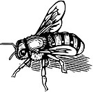 Cartoon drawing of a bee illustrated in black and white