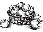 A black and white pictorial illustration of a basketful of apples