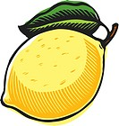 A big yellow lemon on a white background