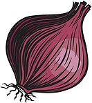 A bulb of red onion on a white background