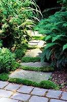 A path is made with stones amidst the plants