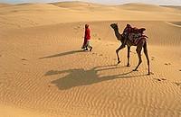 Camel in Sand Dunes , Jaisalmer , Rajasthan , India