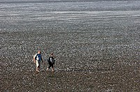 Hiker, in, the, wadden, sea, at, low, tide, Neuharlingersiel, Lower, Saxony, Germany