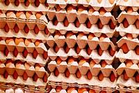Egg crates. La Boquería market. Barcelona. Spain.