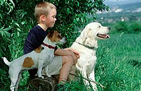 Boy, with, Golden, Retriever, and, Jack, Russell, Terrier