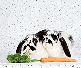 Lop-eared, Rabbits, pair, and, carrot