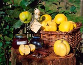 Quince, fruits, in, basket, jelly, and, liqueur, Cydonia, oblonga