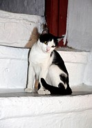Cat on steps