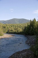 A salmon spawning stream in the mountains of Quebec