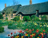 Anne Hathaway´s cottage  Photographed in Stratford Upon Avon, UK