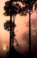 Rainforest at dawn, Danum valley nature reserve, Borneo, Malaysia