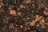 Mature biological cryptobiotic crust on desert soil surface, Coconino National Forest, Arizona  Biological soil crusts are important components of des...