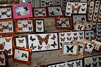 Greece, island Rhodes valley of the butterflies souvenir-business sale butterfly-preparations, Mediterranean-island, Dodekanes, business, sale, souven...
