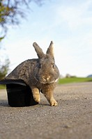 Grey rabbit sitting in a top hat, selective focus