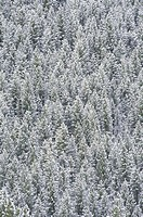 High angle view of trees in a forest, Ketchum, Idaho, USA