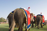 Rear view of three men riding elephants at an elephant festival, Jaipur, Rajasthan, India