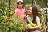 Asian mother and young daughter picking vegetables in garden