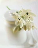Jasmine flowers with sugar container