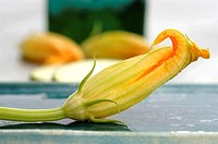 Zucchini blossom, close-up