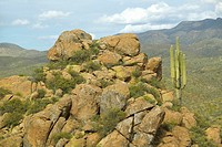 Saguaro cactus and hillside with mountains in background