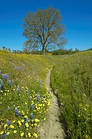 A path winding past a lone tree and colorful bouquet of spring flowers blossoming