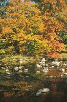 Autumn Leaves By a Stream (thumbnail)