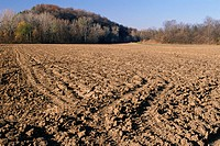 Plowed field at edge of woods