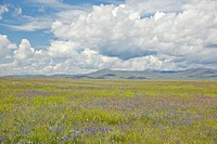 Spring grasslands and mountains in Centennial Valley (thumbnail)