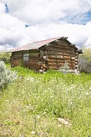 Deserted old homestead in summer
