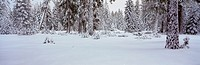 Winter Snowstorm in the Lake Tahoe Area