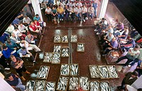 Auction at fish exchange. Ondarroa. Vizcaya. Euskadi. Spain.