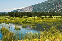 CALIFORNIA   Lake Tahoe   Cove East conservancy restoration project, open space and wetlands